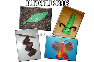 Stages of a Butterfly {CRAFTS}