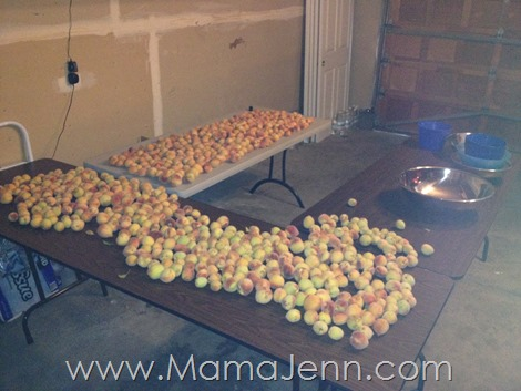 Peaches in Garage